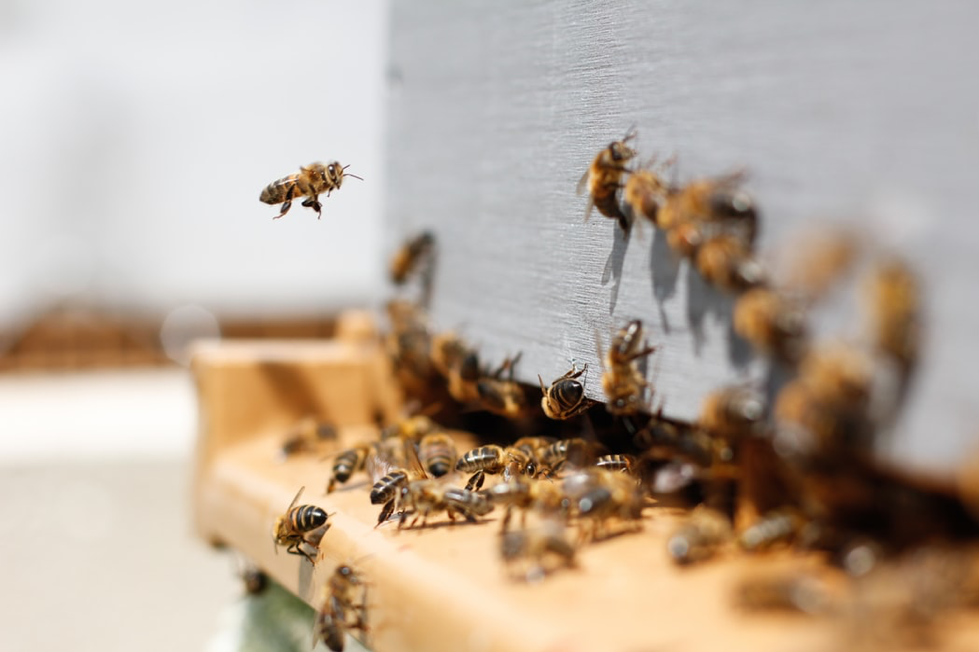 Bees going into a hive