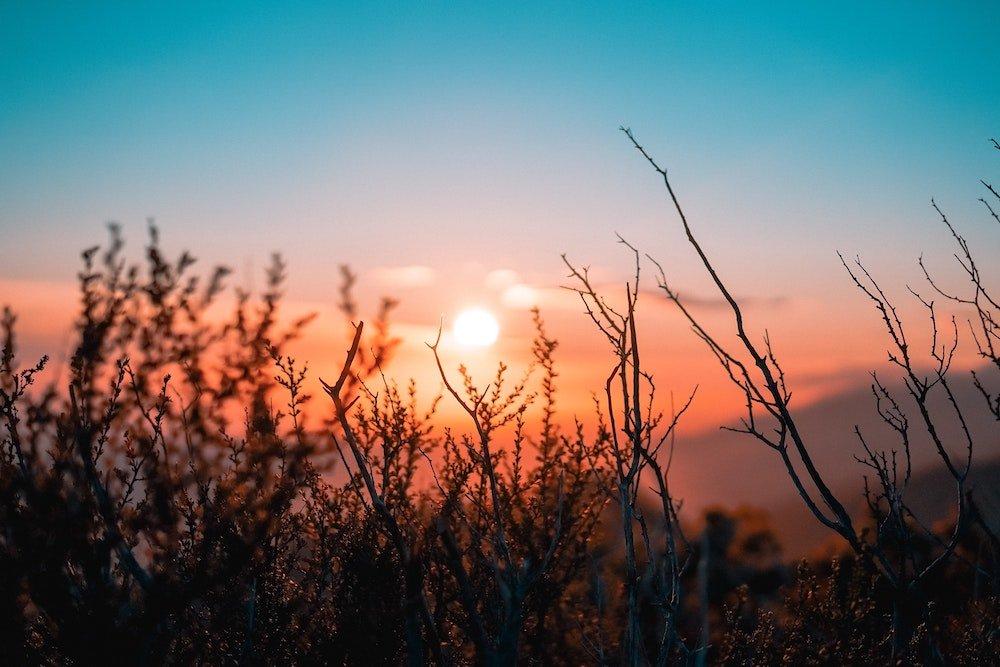 orange sunset through mountain flowers