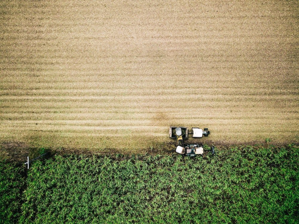 Birds eye view of crop being farmed